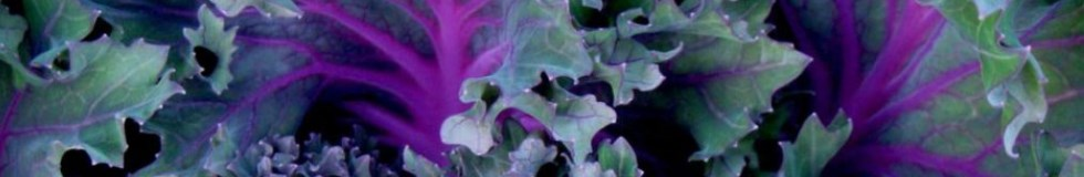 purple kale_featured
