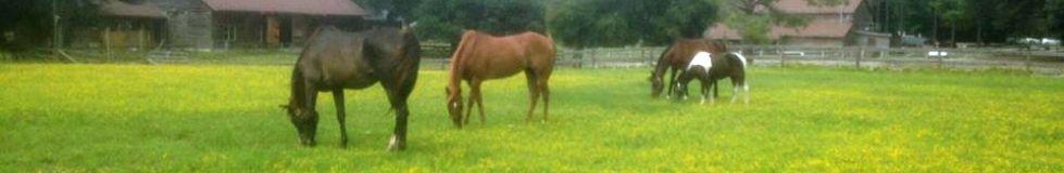 horses pasture160